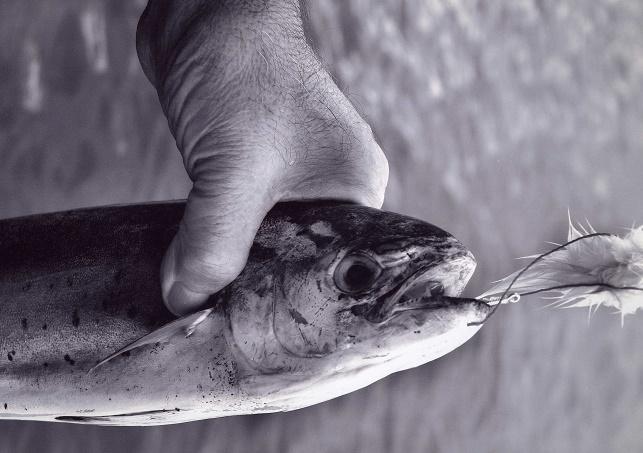 Campeonato de Pesca al Curry: Octubre'16